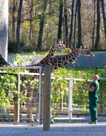Zoo w Krakowie – oaza zieleni, w której odnajdą się dzieci i dorośli